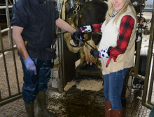 Geraldine shoes a cow with th help of Ned Murphy
